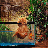 CAT 03 RS0142 01