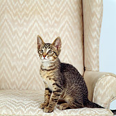 CAT 03 RS0144 02