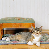 CAT 03 RS0179 01