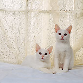 CAT 03 RS0248 02