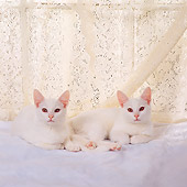 CAT 03 RS0249 02
