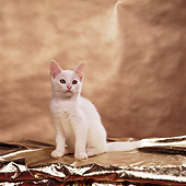 CAT 03 RS0252 03