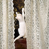 CAT 03 RS0256 01