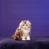 CAT 03 RS0303 02