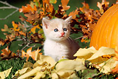 CAT 03 RW0001 01