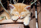 CAT 03 SS0003 01