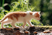 CAT 03 SS0006 01