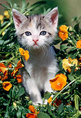 CAT 03 SS0013 01