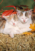 CAT 03 SS0015 01