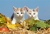 CAT 03 SS0016 01