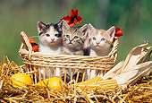 CAT 03 SS0017 01