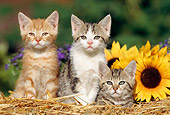CAT 03 SS0018 01