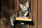 CAT 03 SS0025 01