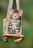 CAT 03 SS0026 01