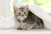 CAT 03 YT0005 01
