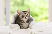 CAT 03 YT0006 01
