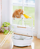 CAT 03 YT0008 01