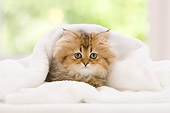 CAT 03 YT0015 01