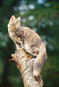 CAT 04 AB0002 01