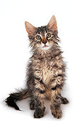 CAT 04 AL0006 01