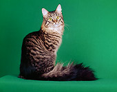 CAT 04 CH0001 01