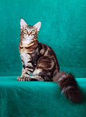 CAT 04 CH0004 01
