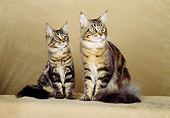 CAT 04 CH0015 01