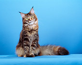 CAT 04 CH0016 01