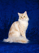 CAT 04 CH0020 01