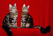 CAT 04 CH0022 01