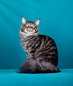 CAT 04 CH0026 01