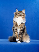 CAT 04 CH0027 01