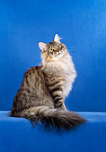 CAT 04 CH0029 01