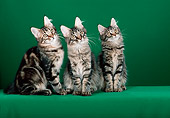 CAT 04 CH0032 01