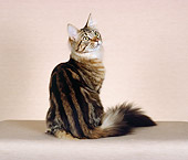 CAT 04 CH0034 01