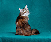 CAT 04 CH0037 01