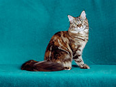 CAT 04 CH0038 01