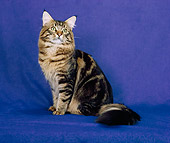 CAT 04 CH0039 01