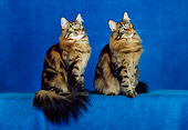 CAT 04 CH0040 01