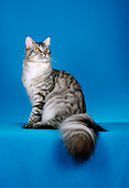 CAT 04 CH0043 01