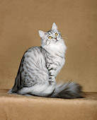CAT 04 CH0044 01