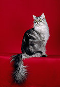 CAT 04 CH0047 01