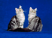 CAT 04 CH0049 01
