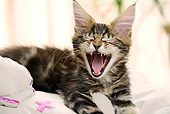 CAT 04 JE0002 01