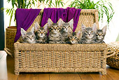 CAT 04 JE0003 01