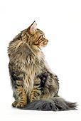 CAT 04 JE0005 01