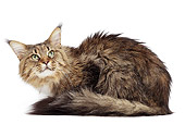 CAT 04 JE0006 01