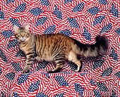 CAT 04 RK0171 02