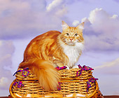 CAT 04 RK0174 03