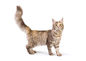 CAT 04 RK0220 01